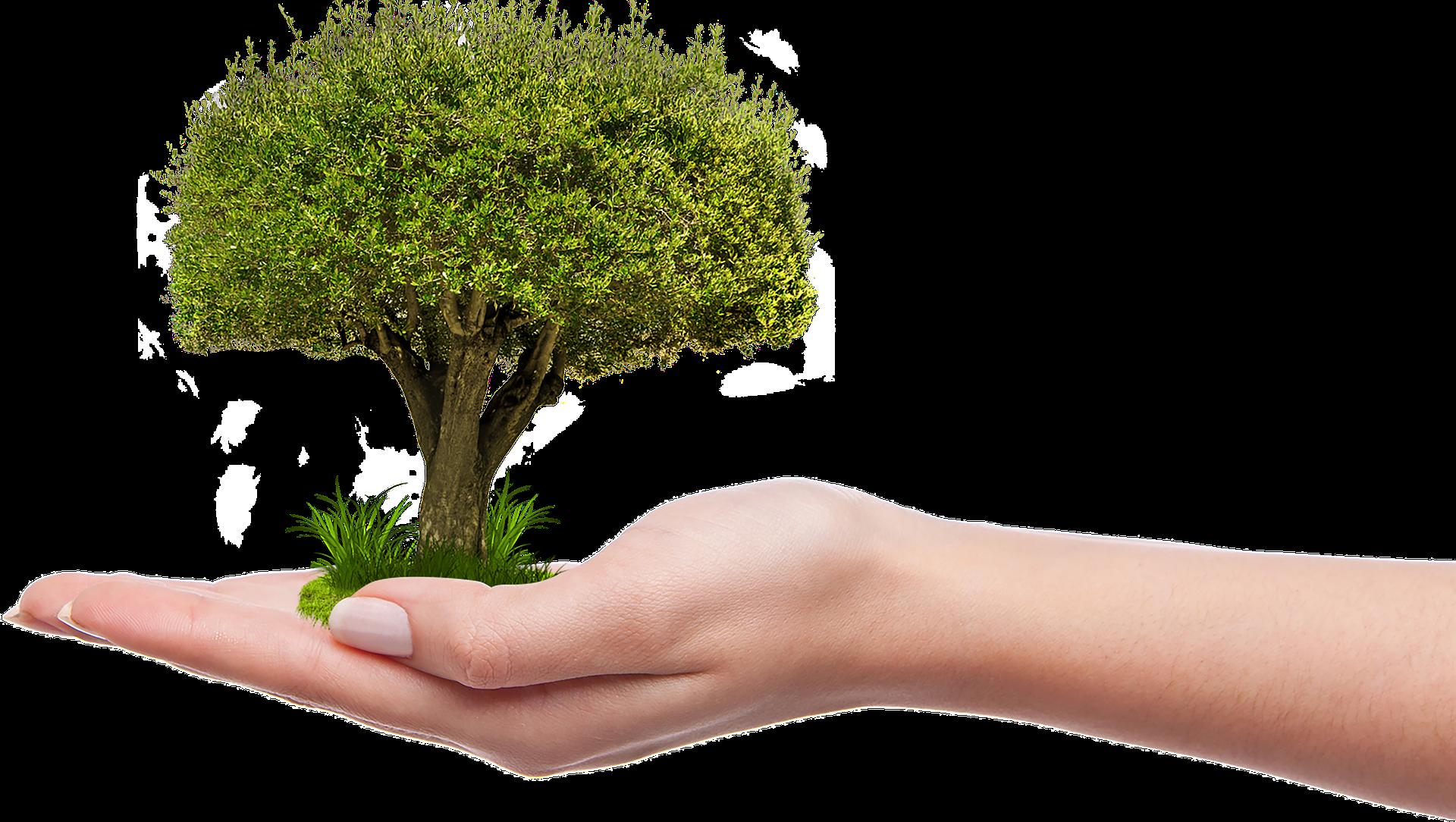 Protection environnement - écologie - respect environnement